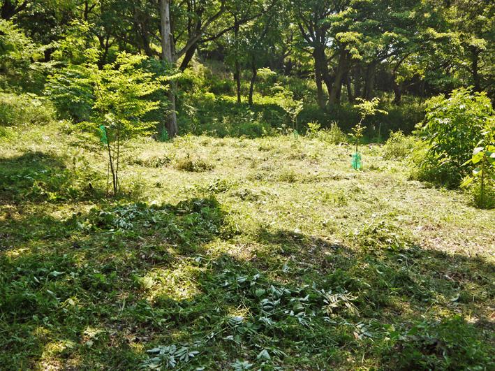 メーンの作業は苗木周辺の下草刈り5・20六国見山定例手入れ_c0014967_22245140.jpg