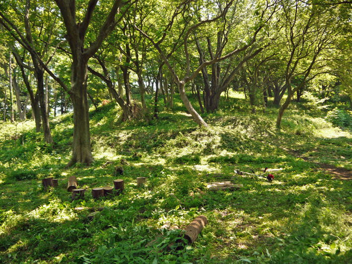メーンの作業は苗木周辺の下草刈り5・20六国見山定例手入れ_c0014967_2225765.jpg