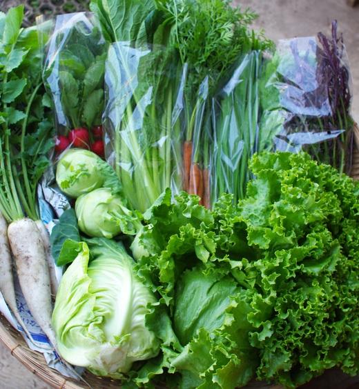 今週の野菜セット(5/23~5/27着)_c0110869_137326.jpg