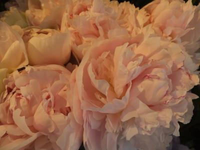 オークリーフ(おすすめの花クレマチス)_f0049672_15321478.jpg