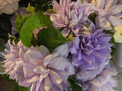 オークリーフ(おすすめの花クレマチス)_f0049672_15322674.jpg