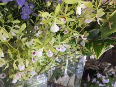 オークリーフ(おすすめの花クレマチス)_f0049672_15325041.jpg
