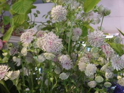 オークリーフ(おすすめの花クレマチス)_f0049672_15330182.jpg