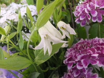 オークリーフ(おすすめの花クレマチス)_f0049672_15331272.jpg