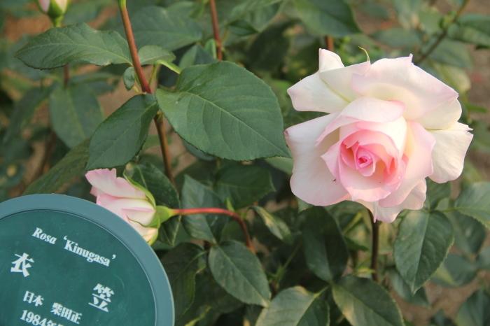 大阪 緑地公園_c0100195_09370347.jpg