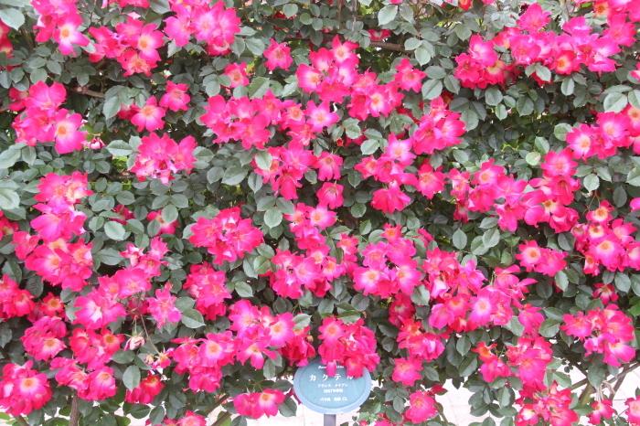 大阪 緑地公園_c0100195_09374280.jpg