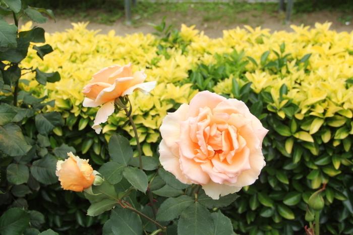 大阪 緑地公園_c0100195_09381611.jpg