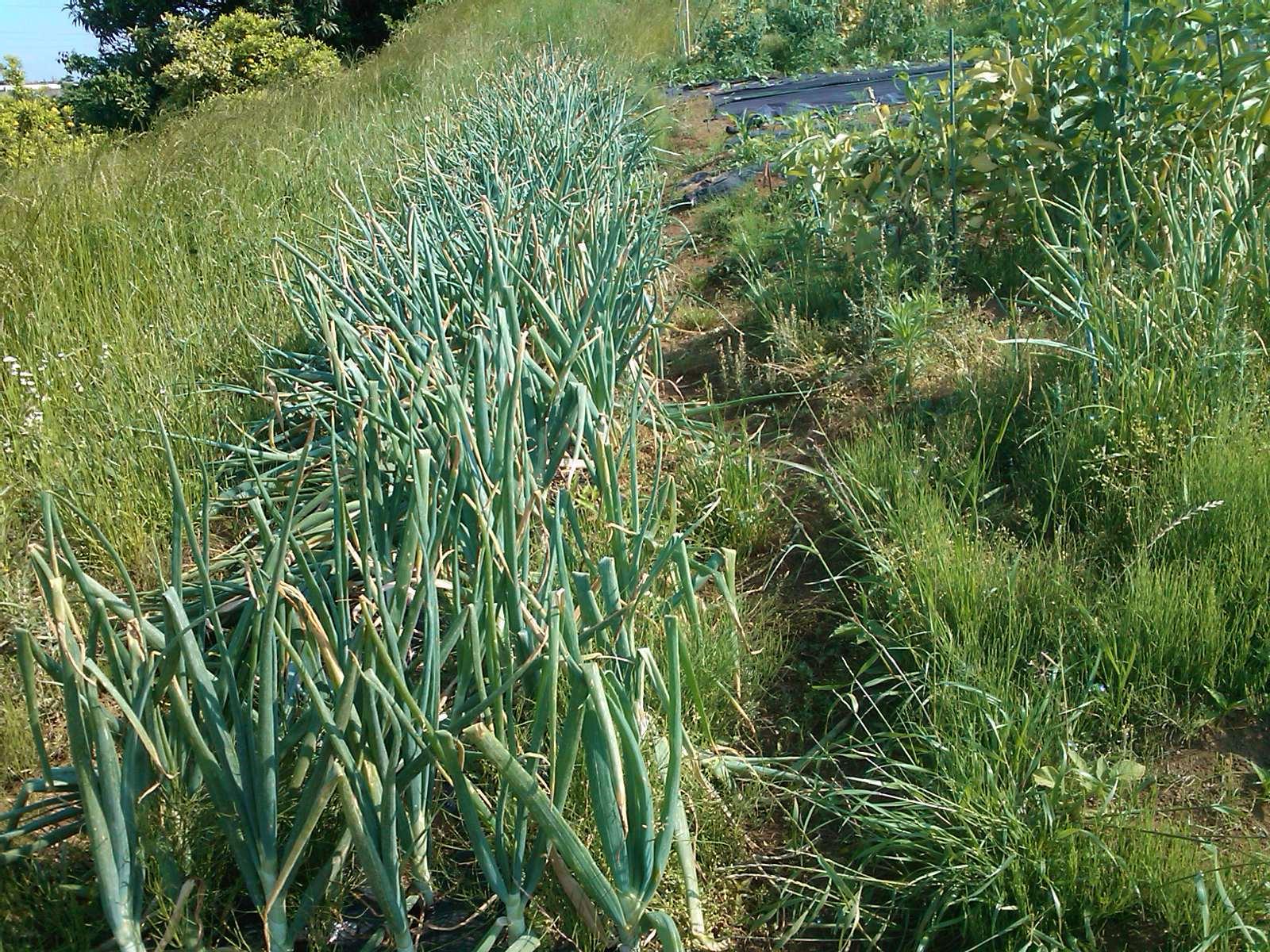 夏野菜の収穫...キューリから_b0137932_17324729.jpg