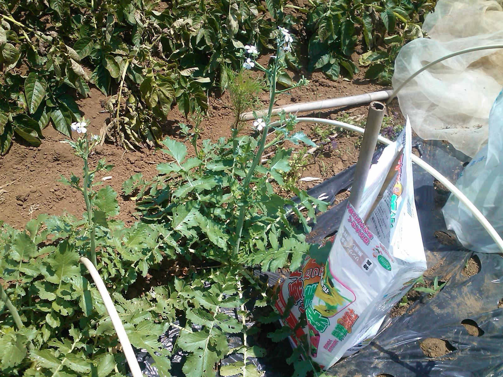 夏野菜の収穫...キューリから_b0137932_18085291.jpg