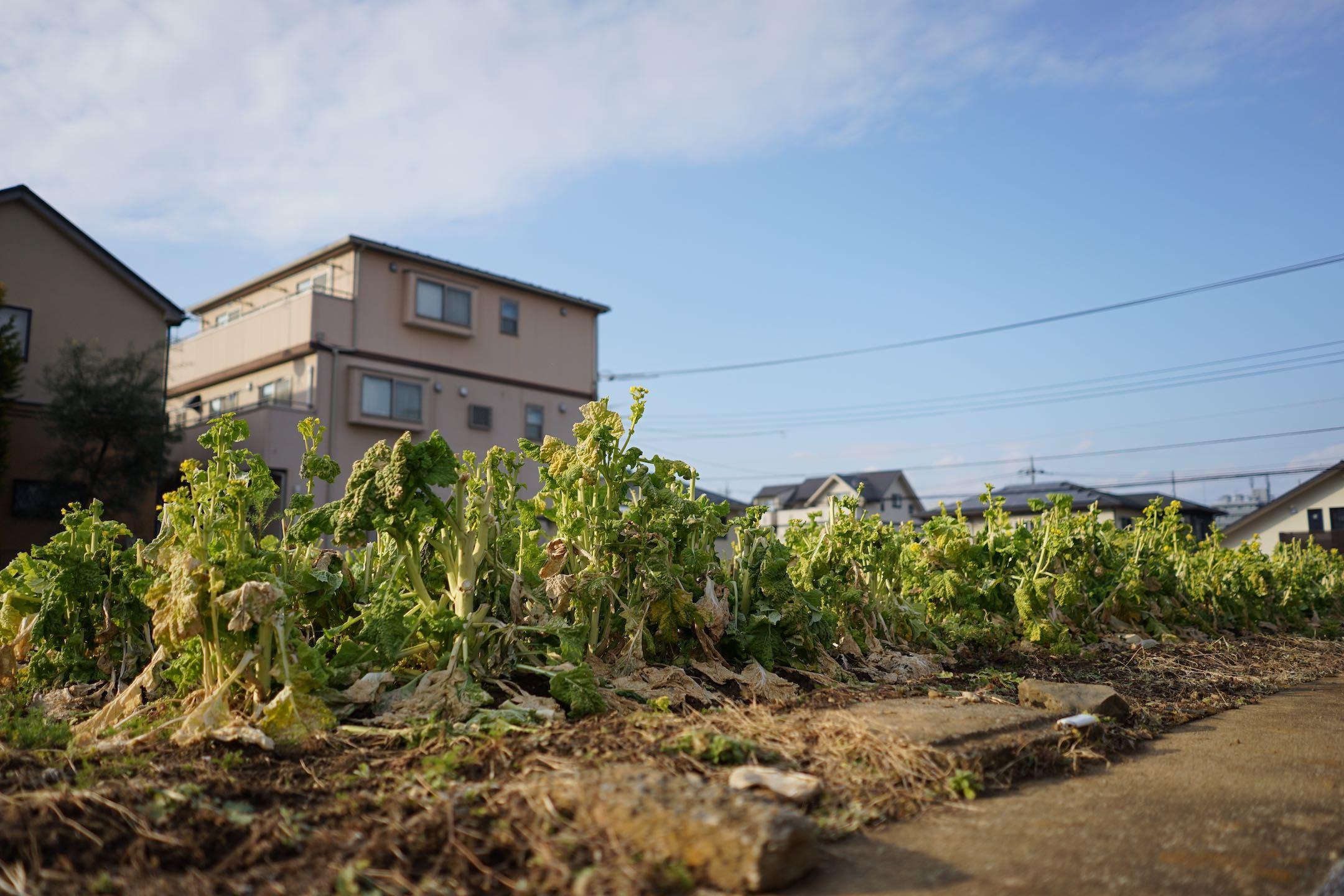 聖蹟桜ケ丘スナップ その43_b0360240_23214465.jpg