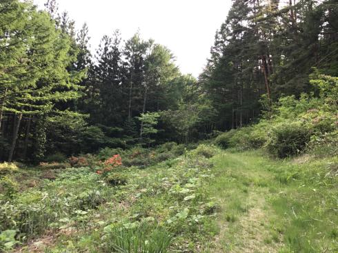 都南つどいの森のトレイルウォーク_b0199244_11342657.jpg