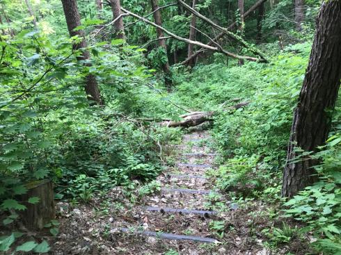 都南つどいの森のトレイルウォーク_b0199244_11342678.jpg