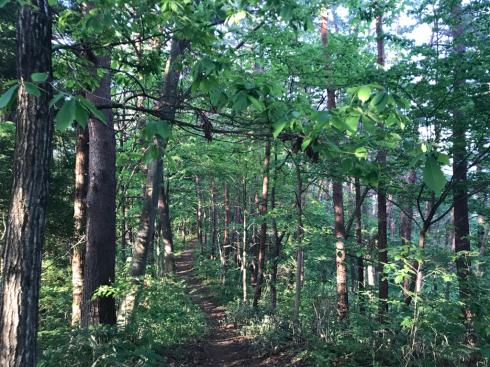 都南つどいの森のトレイルウォーク_b0199244_11355417.jpg