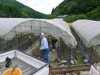種なしかぼす 今年も無農薬・無化学肥料で育てる『種無しかぼす』の花の様子を現地取材!_a0254656_17571093.jpg