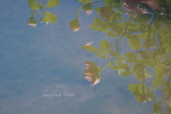 薔薇…絵画のように **_d0344864_21255741.jpg