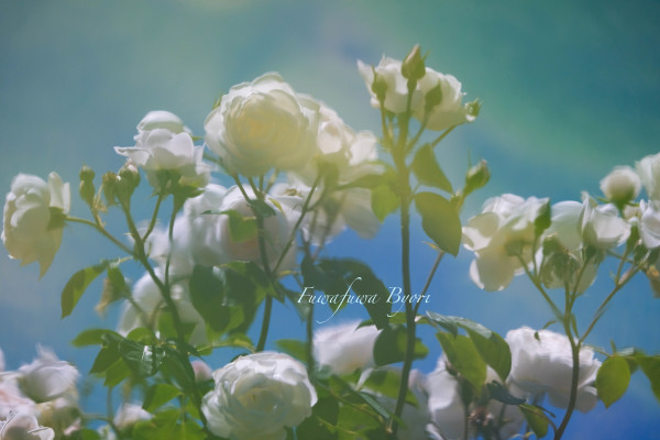 薔薇…絵画のように **_d0344864_21270125.jpg