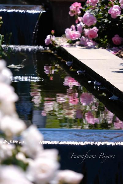 薔薇…絵画のように **_d0344864_21271428.jpg