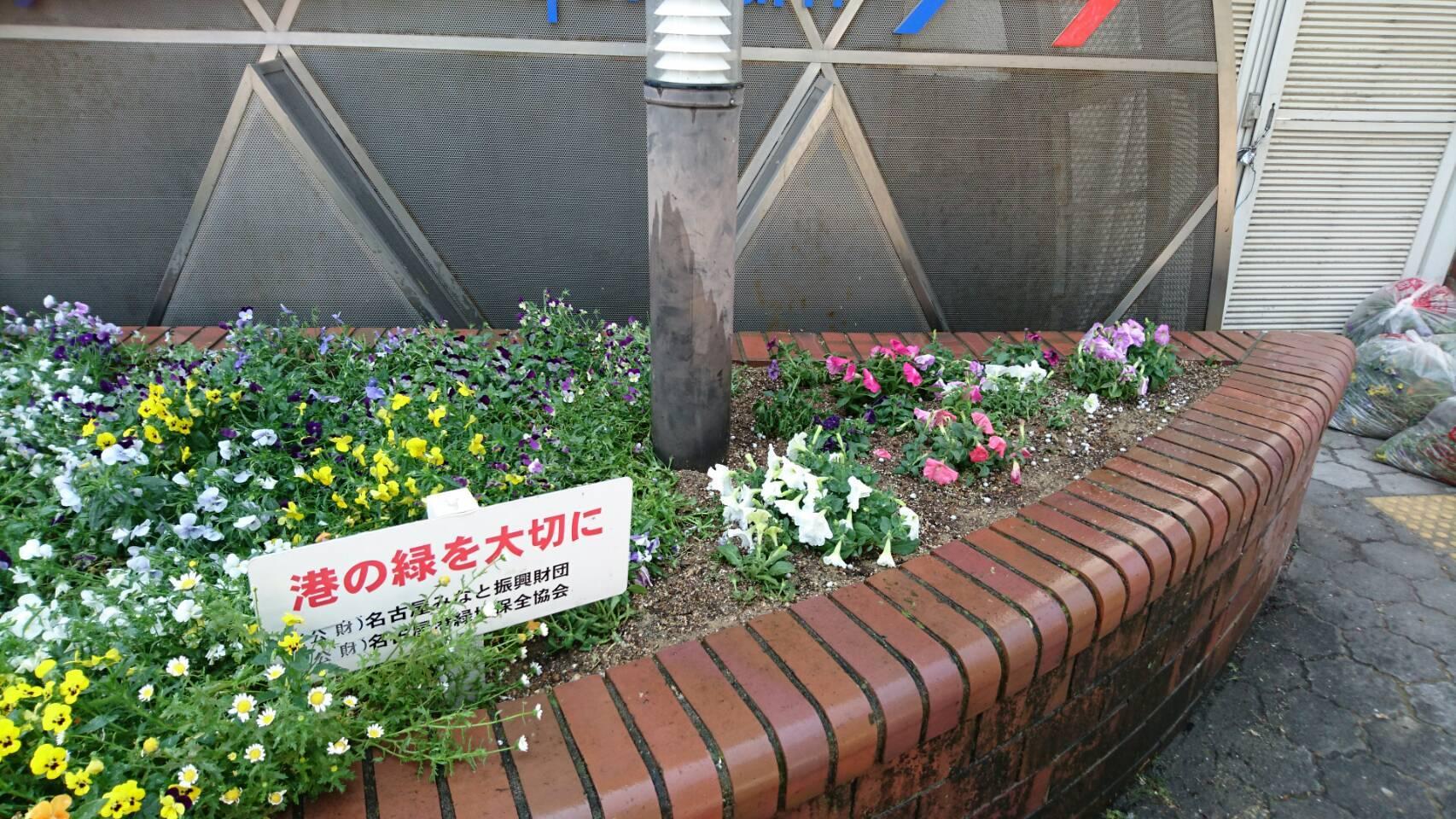ガーデンふ頭総合案内所前花壇の植替えH29.5.22_d0338682_08553904.jpg