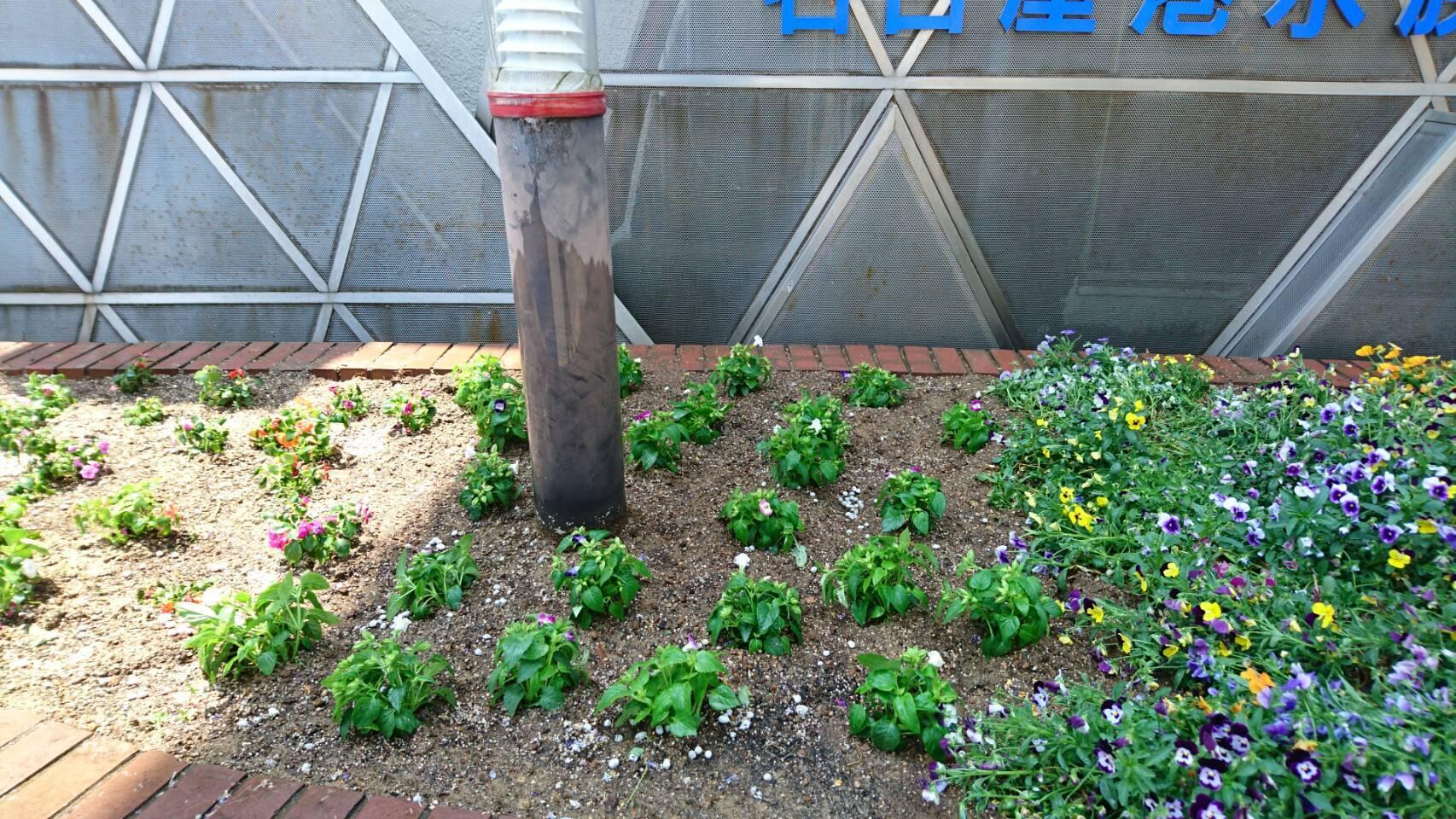 ガーデンふ頭総合案内所前花壇の植替えH29.5.22_d0338682_10204754.jpg