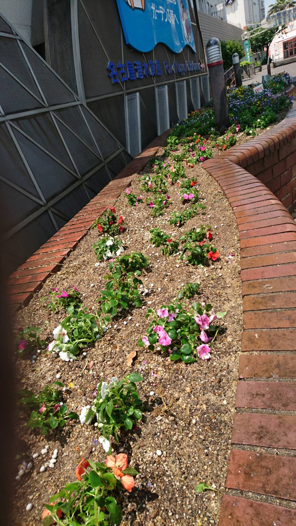 ガーデンふ頭総合案内所前花壇の植替えH29.5.22_d0338682_10224073.jpg