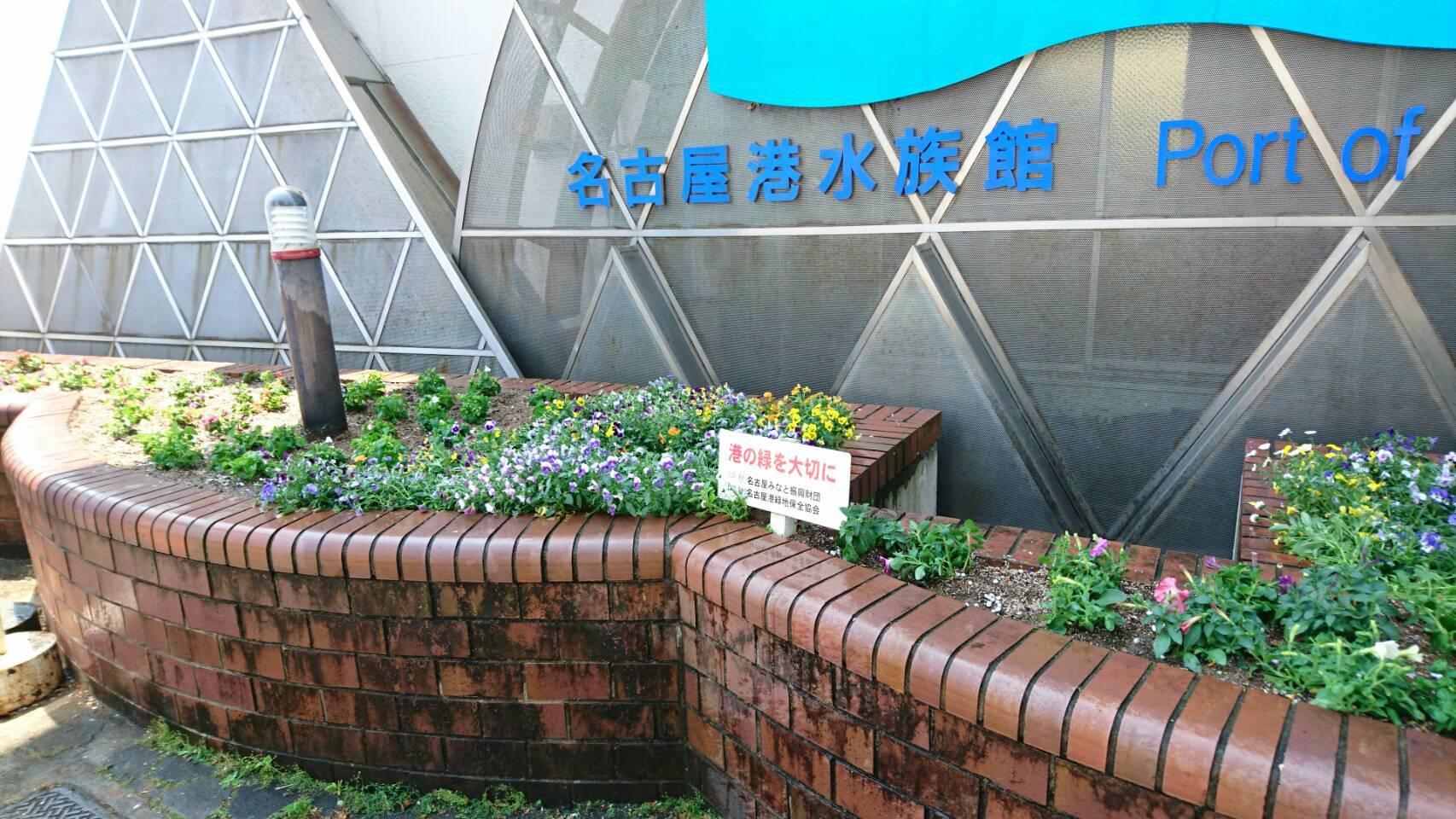 ガーデンふ頭総合案内所前花壇の植替えH29.5.22_d0338682_10231341.jpg