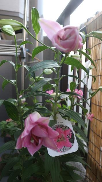 咲きましたよ!_f0280186_21585137.jpg