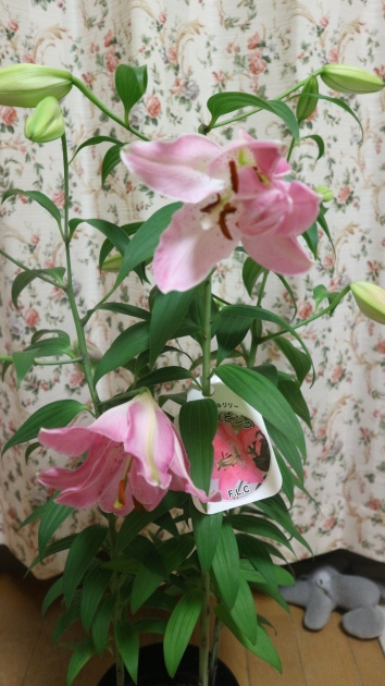 咲きましたよ!_f0280186_21590320.jpg