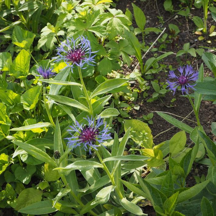 苗の植え込みについて_a0292194_22192516.jpg