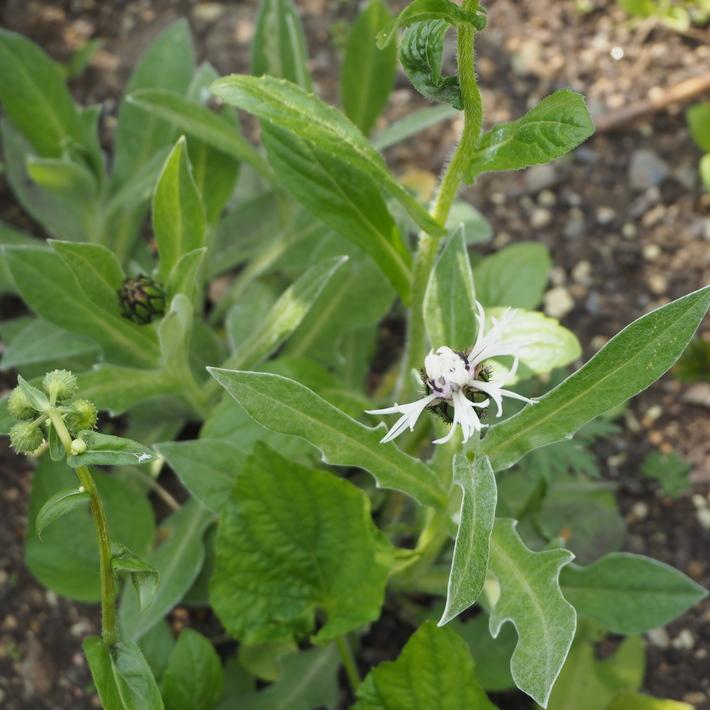 苗の植え込みについて_a0292194_22214956.jpg