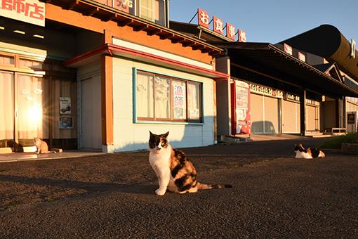 入道崎・灯台猫たち(4)_b0259218_00274313.jpg
