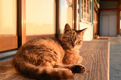 入道崎・灯台猫たち(4)_b0259218_00591576.jpg