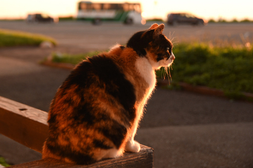 入道崎・灯台猫たち(4)_b0259218_00594973.jpg