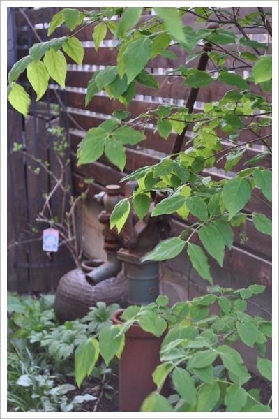 *庭の様子*_e0159050_21235998.jpg