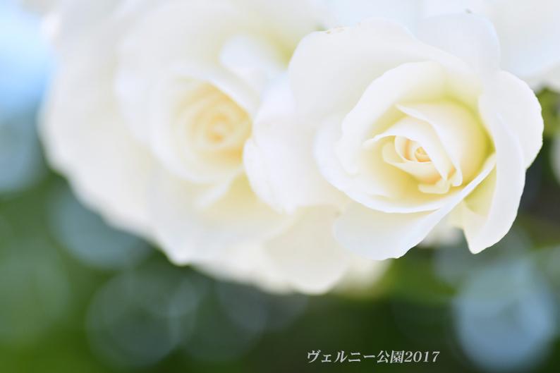 d0251161_13495689.jpg
