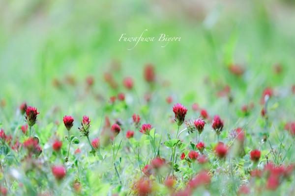 薔薇…絵画のように **_d0344864_18295468.jpg