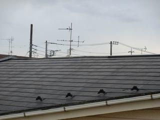 板橋区で屋根調査_c0223192_23190885.jpg