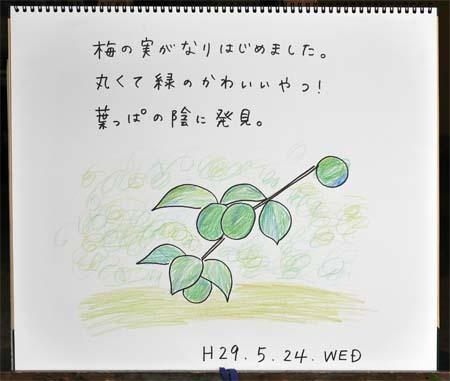 青梅_b0364195_10534184.jpg