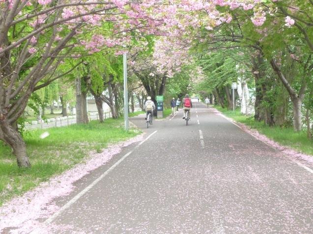 散りゆく桜_b0198109_21475651.jpg