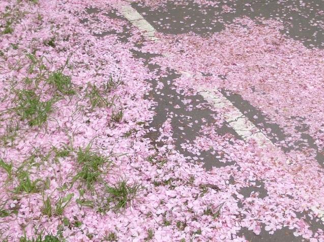 散りゆく桜_b0198109_21480413.jpg