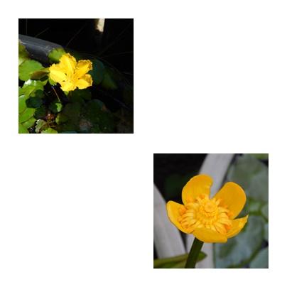 b0352112_16341594.jpg