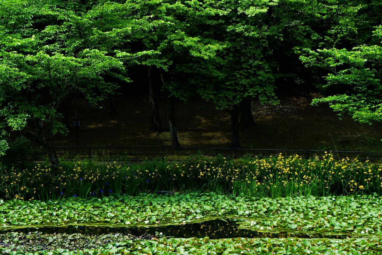 奥卯辰山公園_c0220824_20221978.jpg