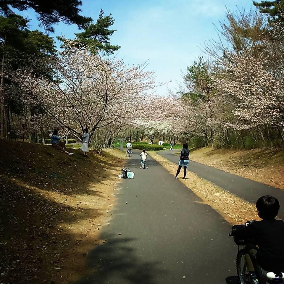 日本滞在記 海浜公園_b0167736_05234985.jpg