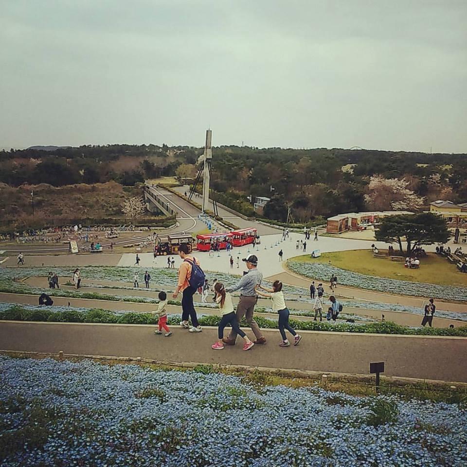 日本滞在記 海浜公園_b0167736_05295296.jpg