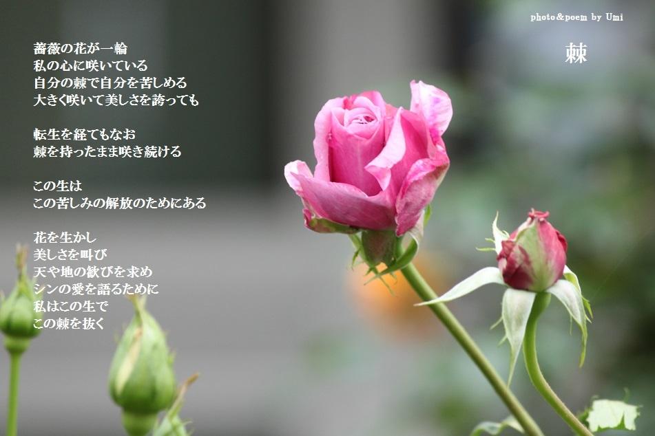 f0351844_22210313.jpg