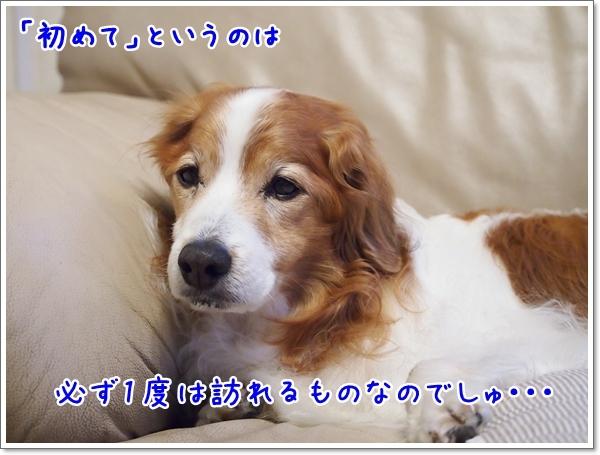 d0013149_00203886.jpg