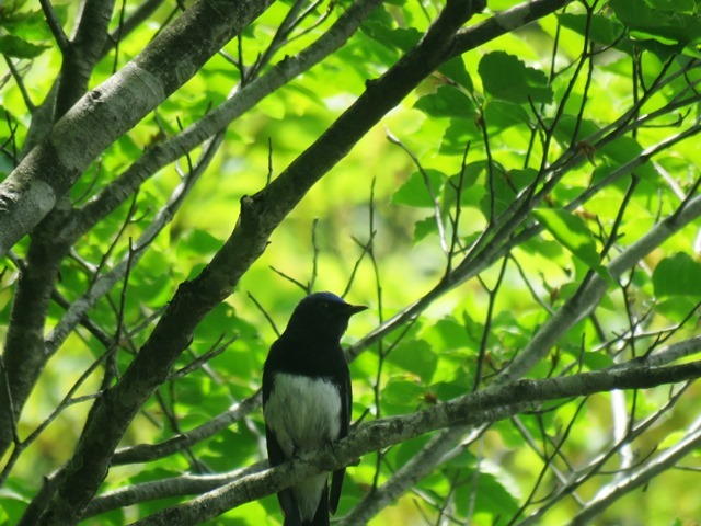 野鳥トレ80 県北の山_b0227552_22332890.jpg