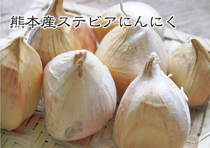 熊本産ステビアにんにく 芽カギ(摘蕾作業)の様子とこだわりの無農薬栽培_a0254656_18341072.jpg