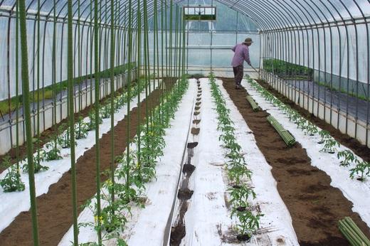大玉トマトを植える_c0110869_132147.jpg