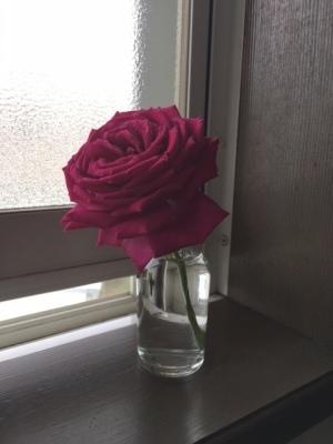 バラの季節_b0367284_12000289.jpg