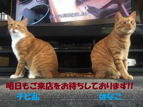 b0271789_00000387.jpg